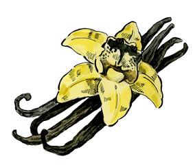 vector vanilla flower