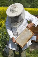 Imker bei seinen Bienenstöcken