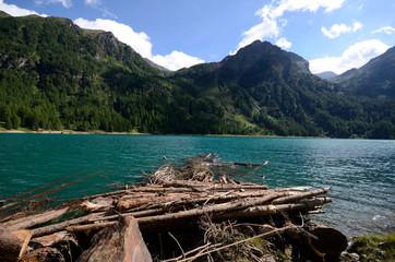 lago con tronchi