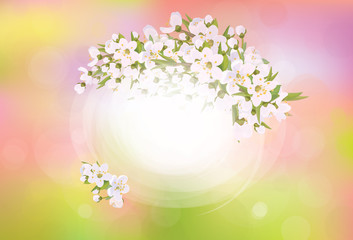 Vector frame blossoming cherry tree, spring background.