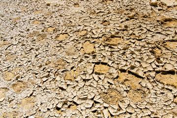 Cracked desert land