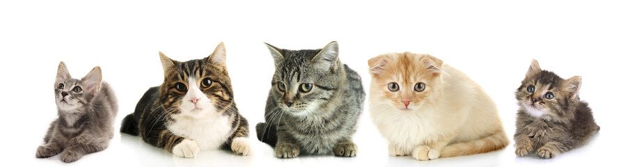Cats and kittens isolated on white