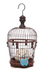 piggy bank locked in a birdcage