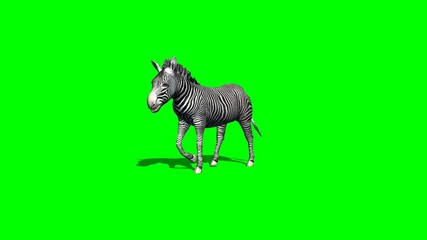 zebra walks - 2 different views - with shadow - green screen 2