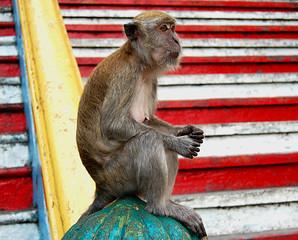 Mono escaleras