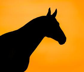 Black horse silhouette on an orange background