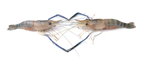 Frash shrimp, prawn with heart shape on white