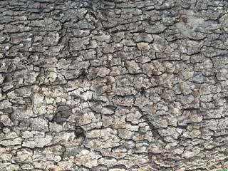 Texture_Bark_002