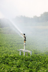 Irrigation in the field