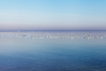 Sea gulls at gulf of Riga, Baltic sea.