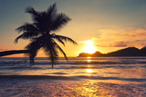 Palme im Sunset
