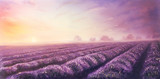 Fototapety Original oil painting of lavender fields on canvas.Sunset land