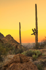 sonoran desert at dawn