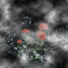 Roses grown in the clouds