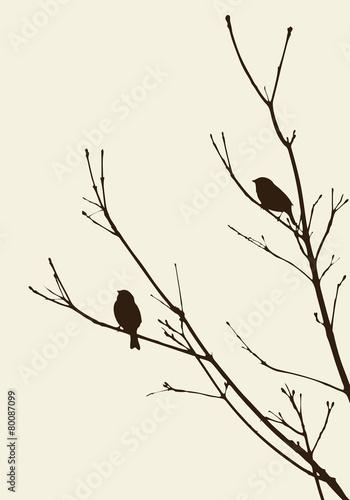 Fototapeta birds on the branches