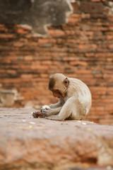 Monkeys at Prang Sam Yot temple in Lopburi