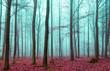 Zauber Wald in rot und türkis - 80088650