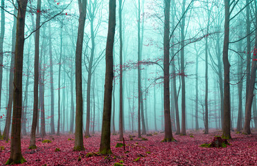 Magiczny las w czerwone i turkus