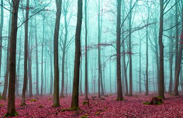 Zauber Wald in rot und türkis © wsf-f