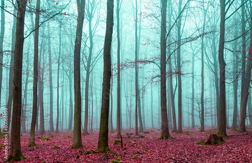 Zauber Wald in rot und türkis