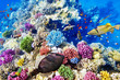 Underwater world with corals and tropical fish. - 80091021