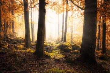 Mystischer Zauberwald