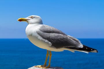 seagull posing in Elba Island