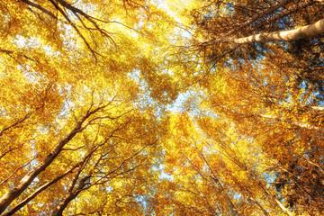 Baumkronen in Herbstfarben