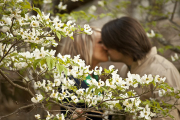 dogwood with couple kissing