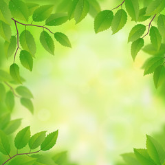 Spring green leaves background, vector illustration