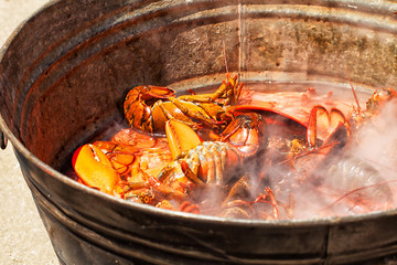 Pot filled with steaming lobsters on the beach. Maine summer