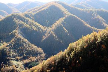 foresta del parco nazionale del casentino in autunno