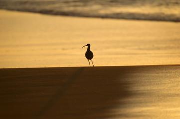 Sandpiper Sunrise
