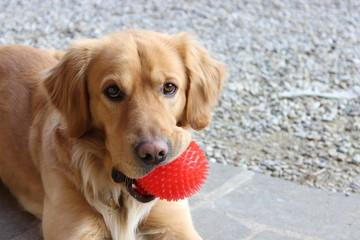 Dog biting a ball