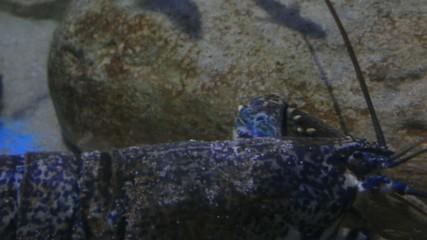 Hummer in Unterwasserwelt mit Fischen