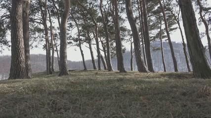 Fantasy Group walking between trees