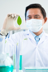 Botanist at research