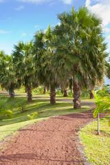 allée de palmiers tropicaux