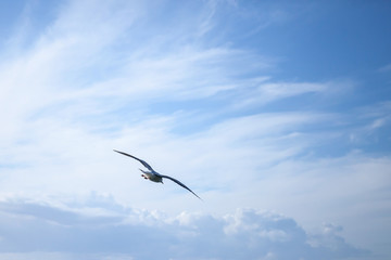 Big seagull flying on cloudy sky background