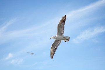 White seagulls flying over blue sky background