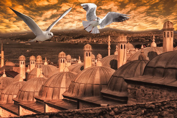 Istanbul Kuppel Sonnenuntergang  Möwe skyline