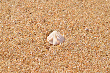 Sea shells with sand as background.