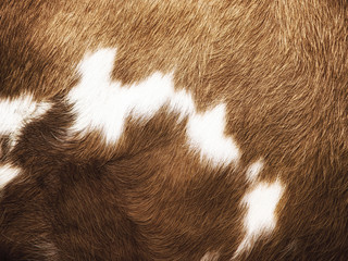 cow fur background (22)