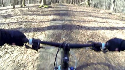 mountain biking forest