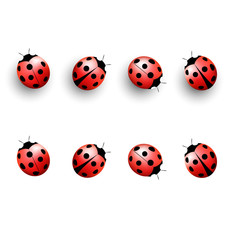Four lady bugs with shadows and isolated on white background