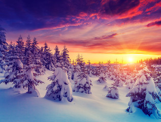Amazing winter in the mountains