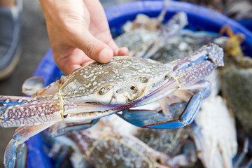crab in the market