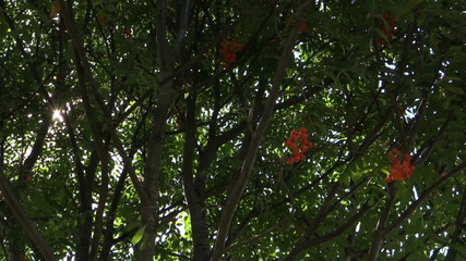 Rowan tree twigs with ripe orange berries and sunlight penetrate