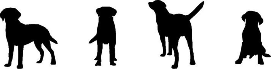 Labrador Retriever, vector silhouette
