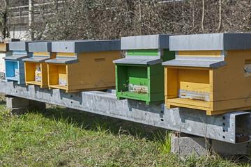 Bienenkästen im Tessin
